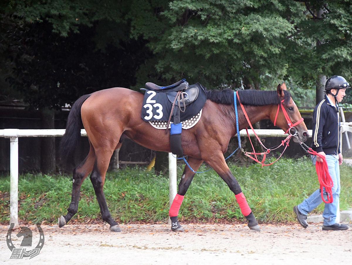 カモンスプリングの馬体写真