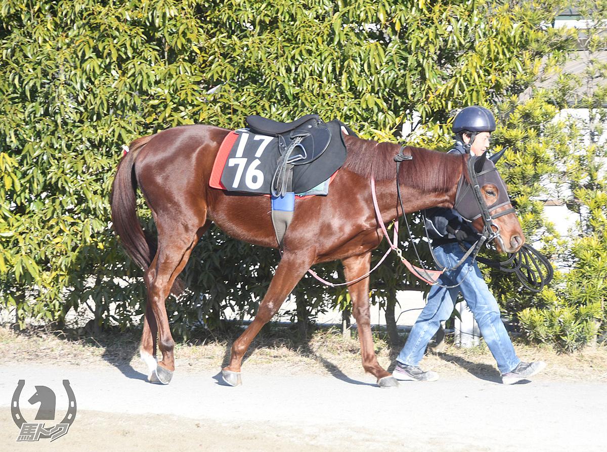 フウバの馬体写真