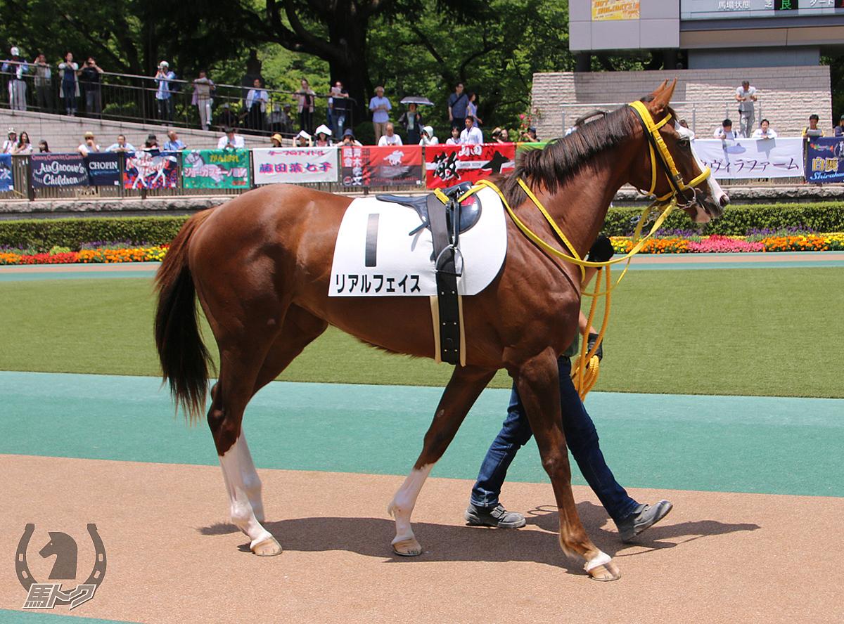 リアルフェイスの馬体写真