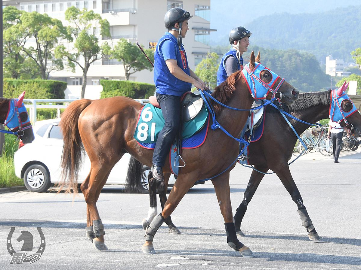 ウインアライバルの馬体写真