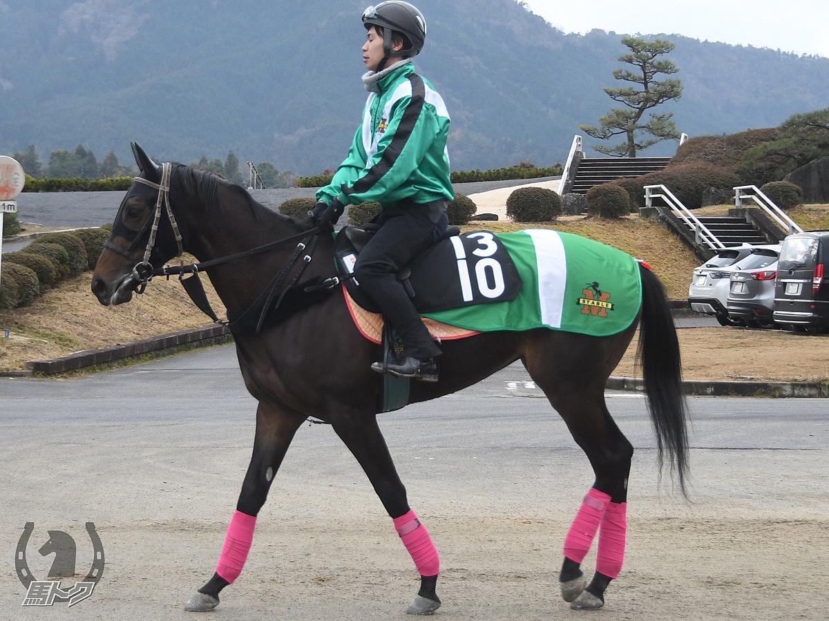 ルビーガールの馬体写真