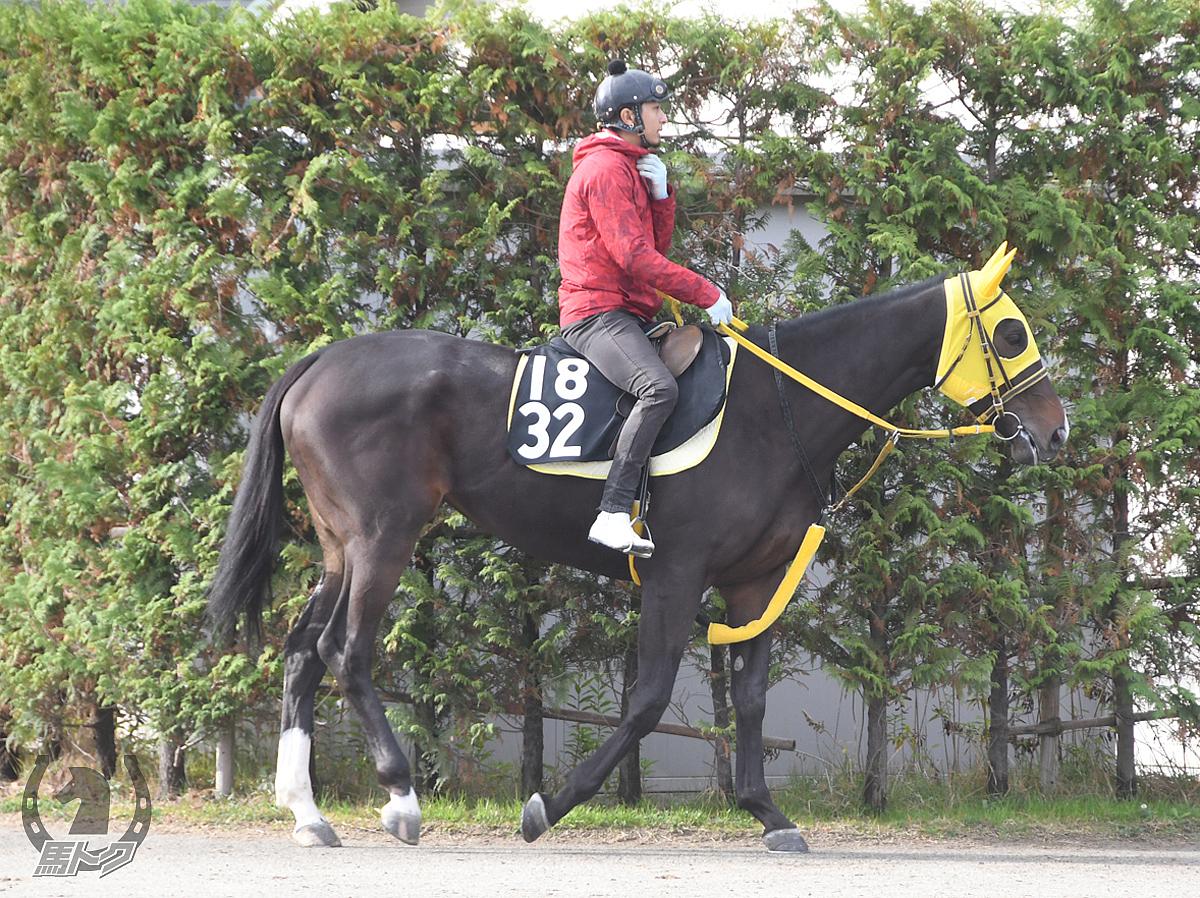 ミギミミミギミミの馬体写真