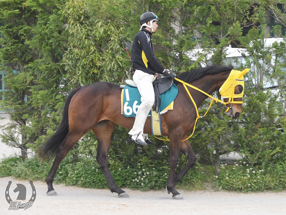 リゲインの馬体写真