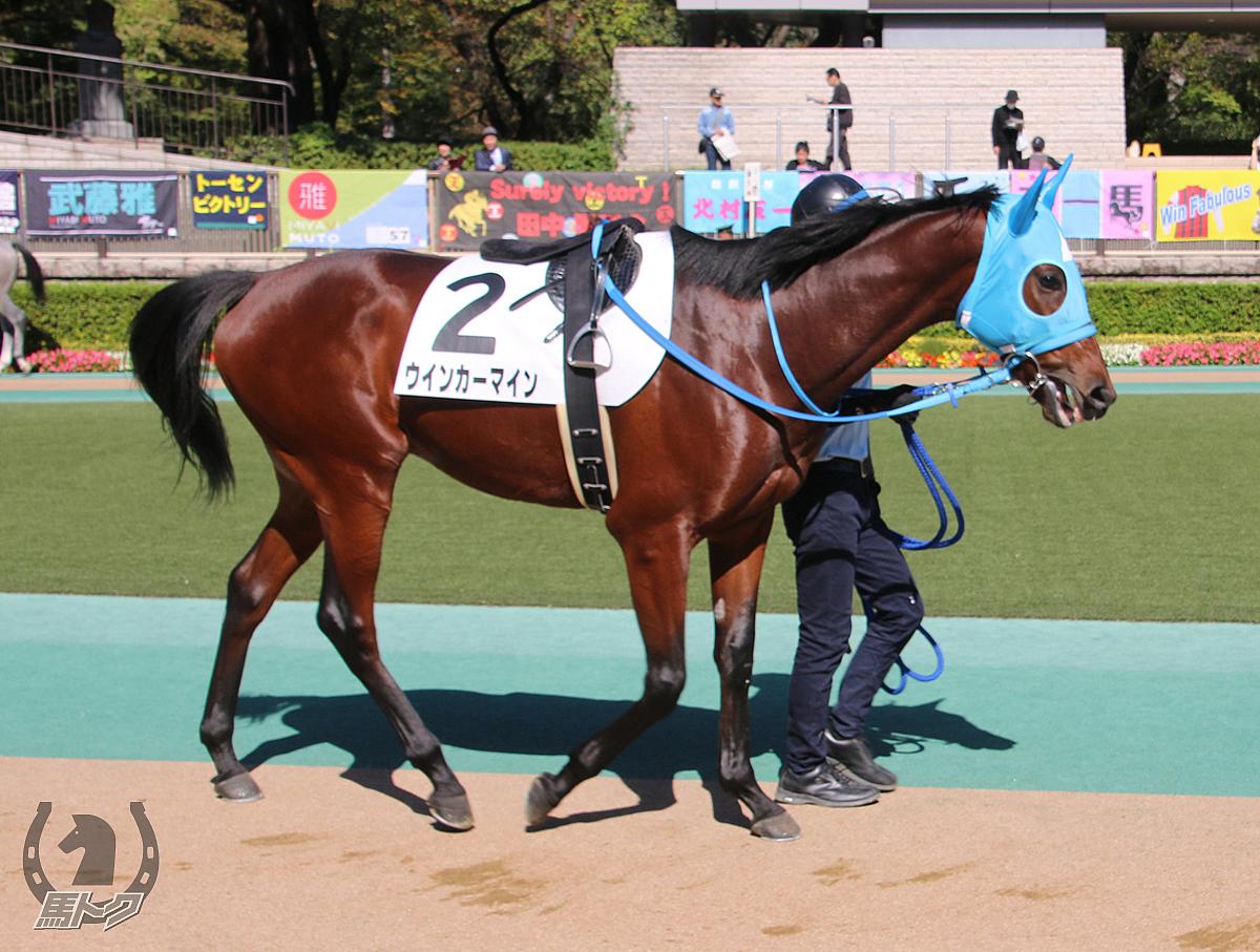 ウインカーマインの馬体写真