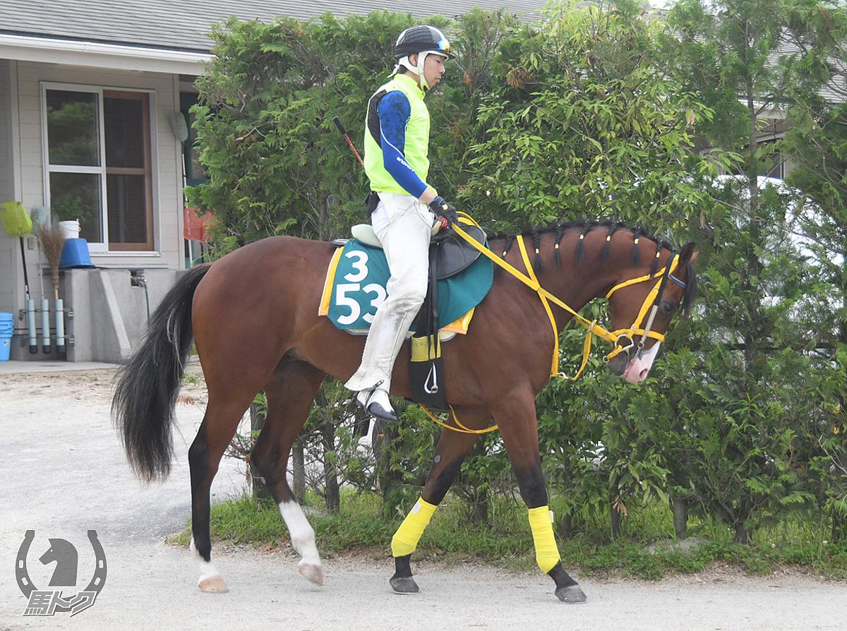 ウインフルスターの馬体写真