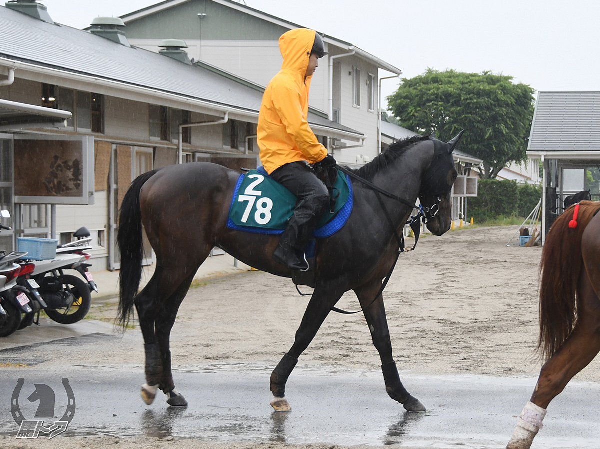 ウインバラーディアの馬体写真