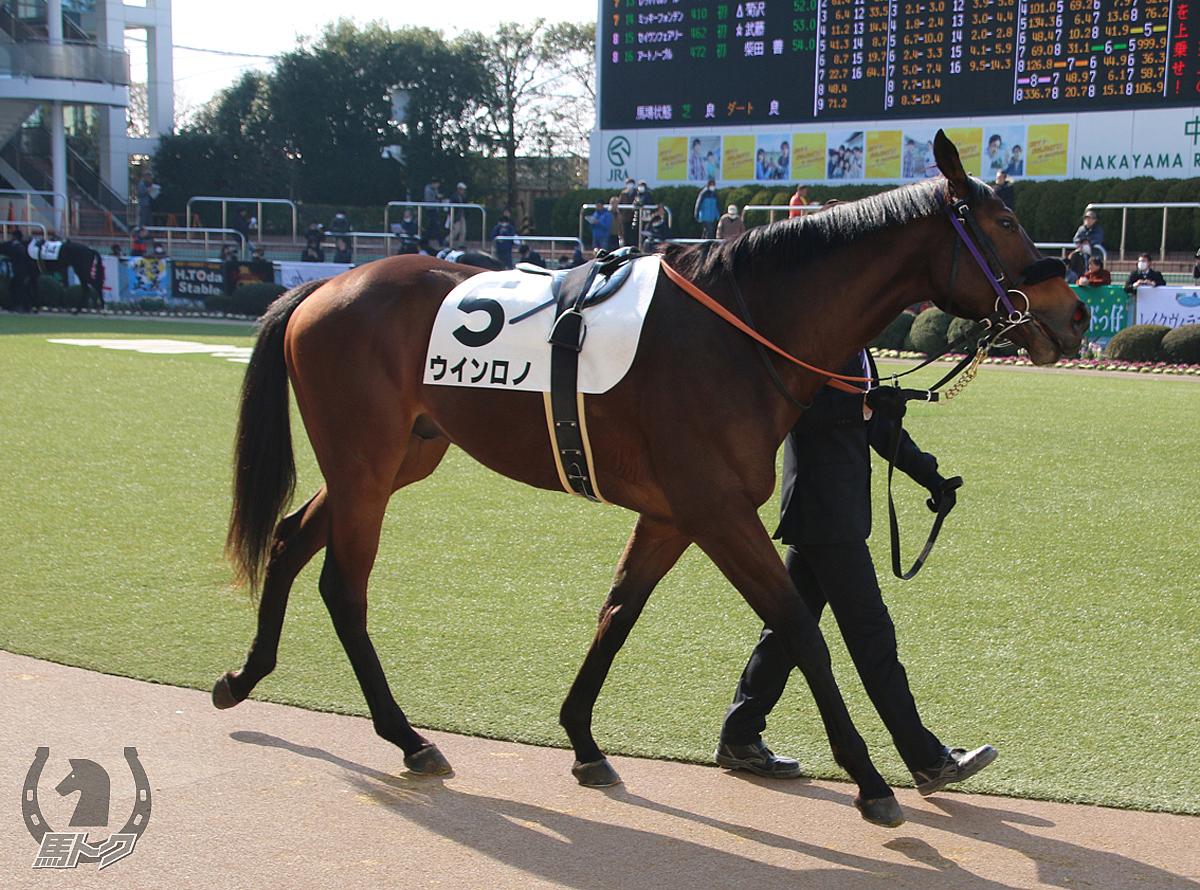ウインロノの馬体写真