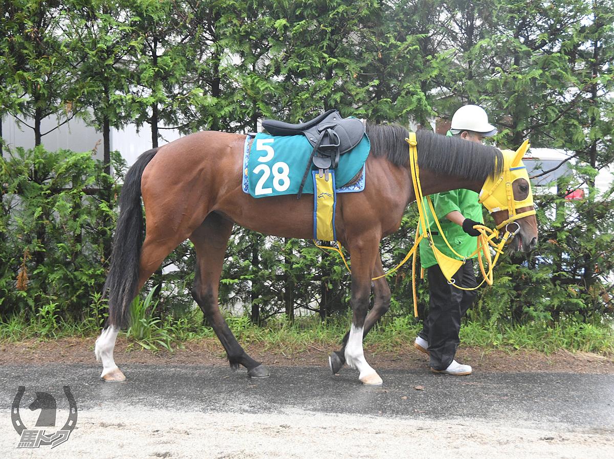 ウインアミーリアの馬体写真