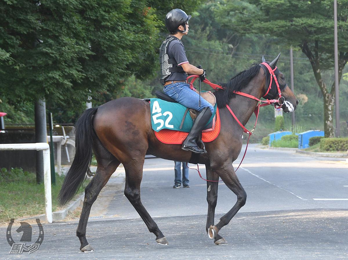 ジョウショームードの馬体写真