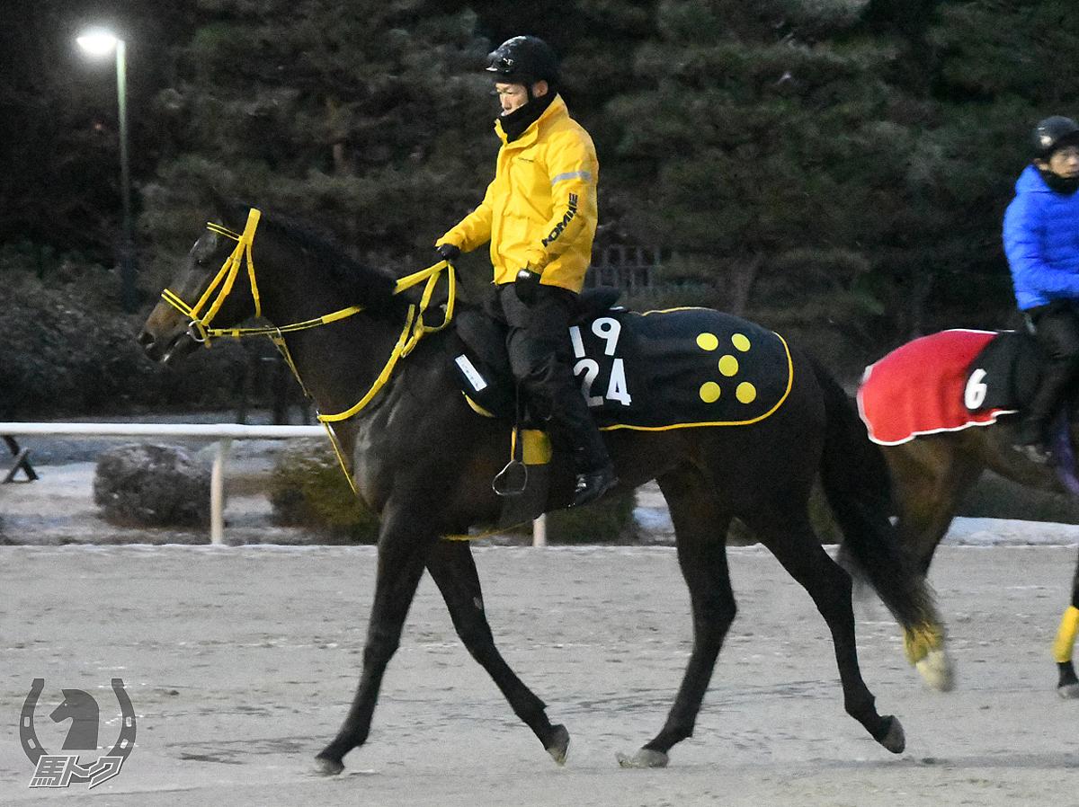 シュガーサンダーの馬体写真