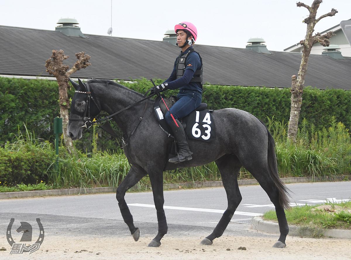アオイハヤブサの馬体写真