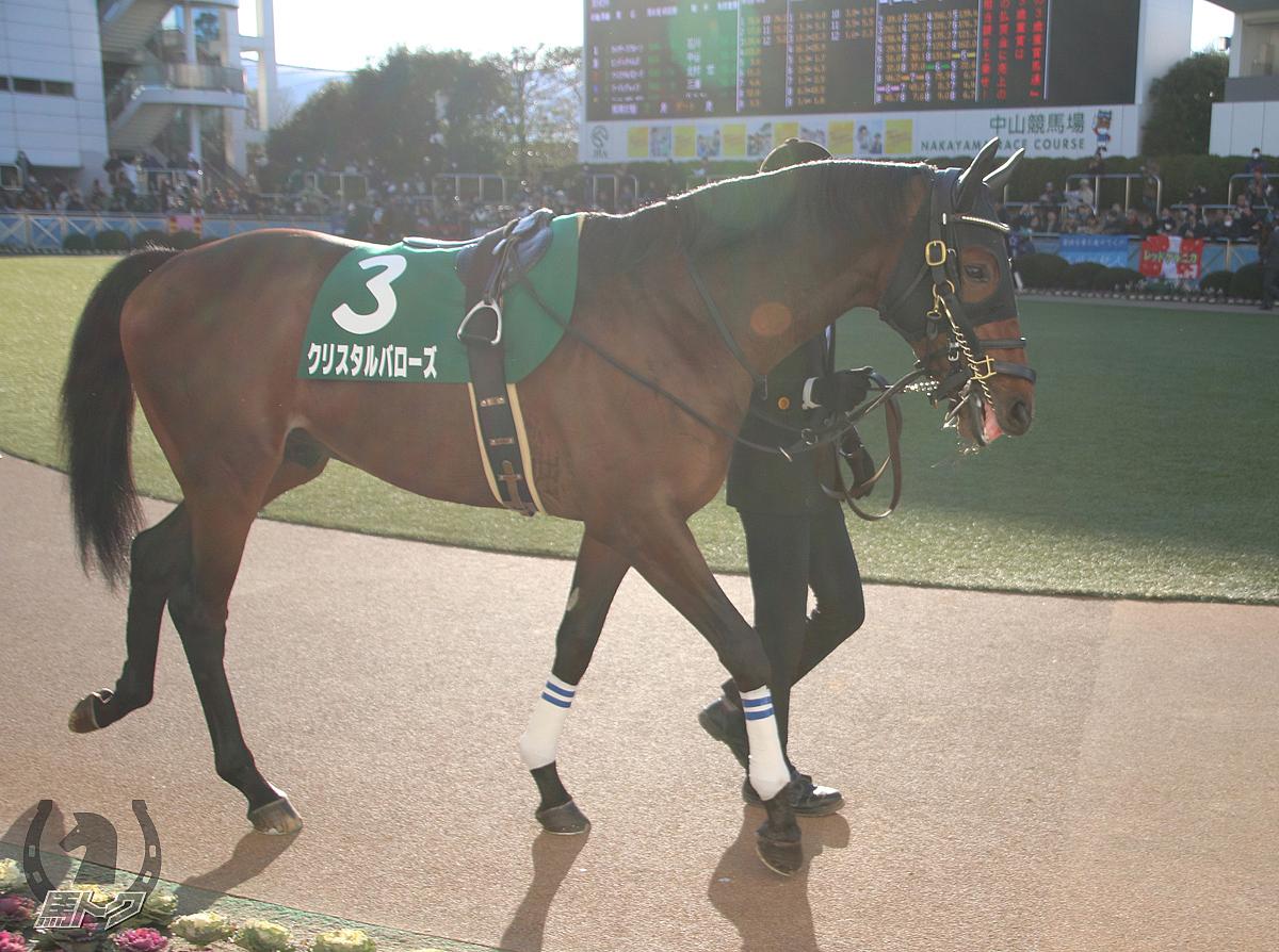 クリスタルバローズの馬体写真