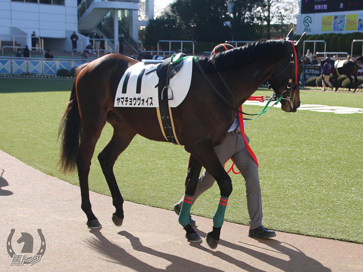 ヤマチョウヴォイスの馬体写真