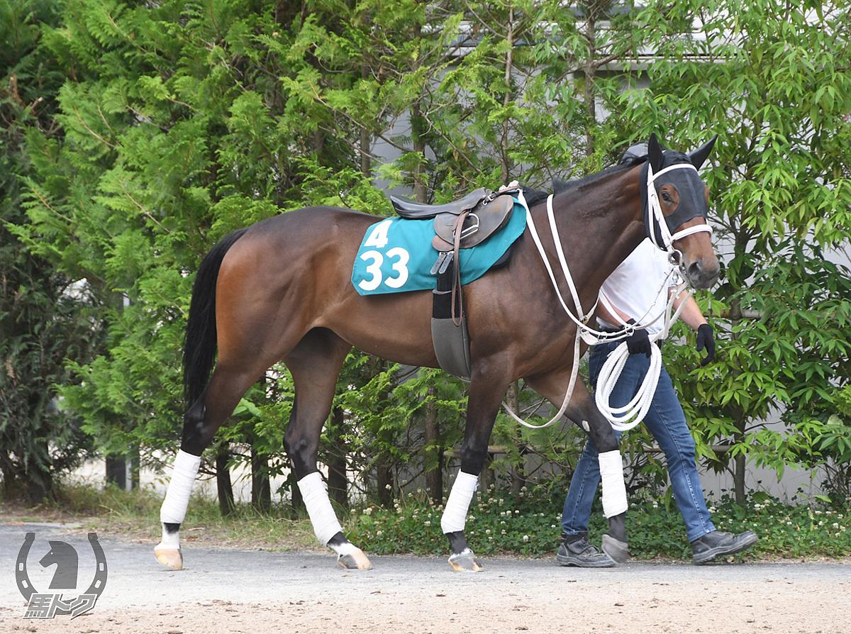 トーセンアミの馬体写真