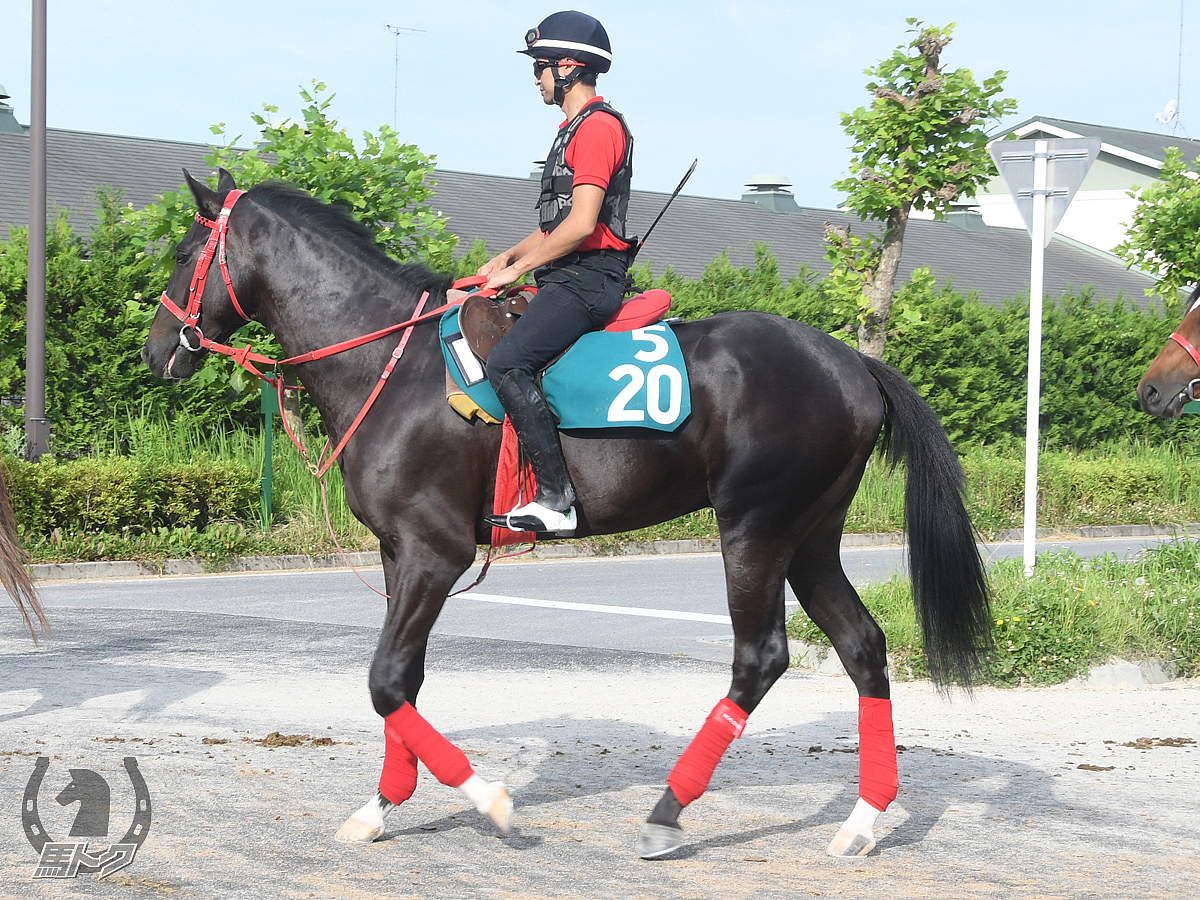シイチの馬体写真