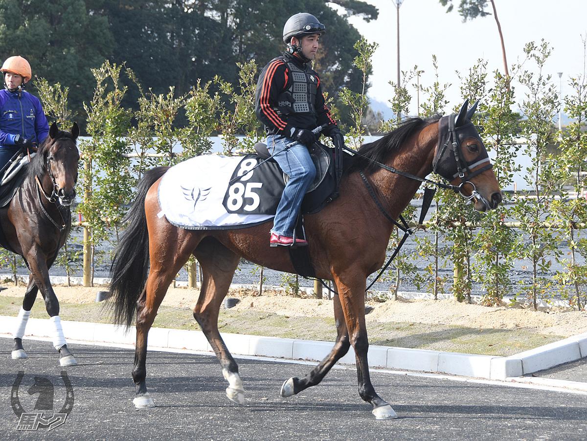 プリンシアルーチェの馬体写真