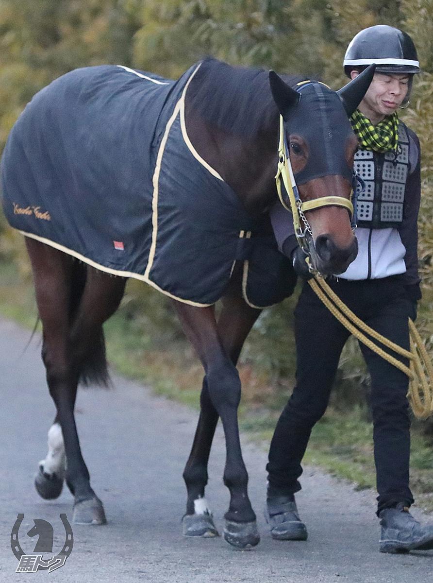 ウォーターエデンの馬体写真