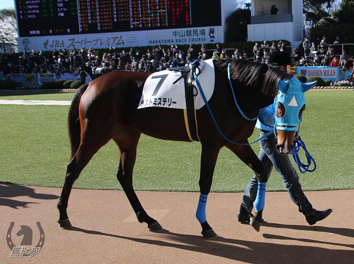 ラストミステリーの馬体写真