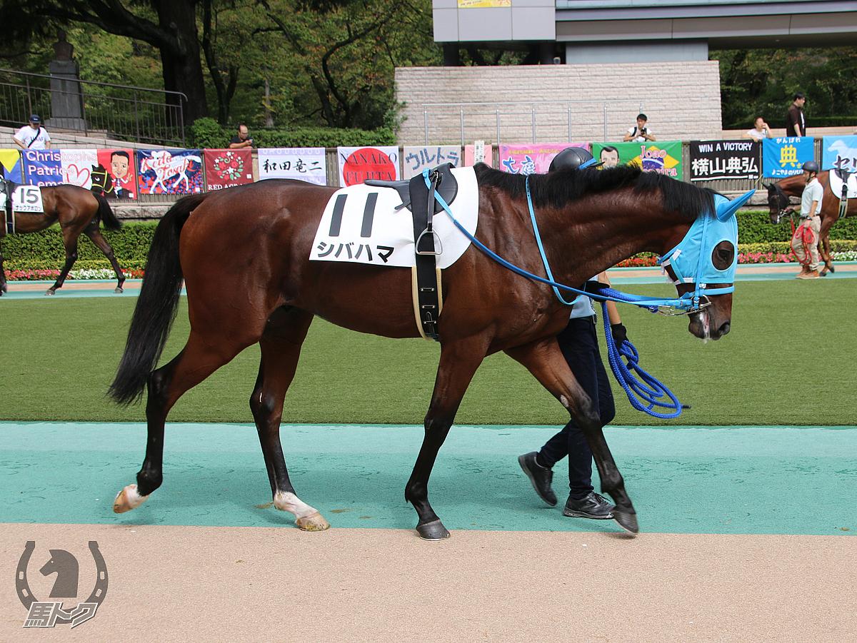 シバハマの馬体写真