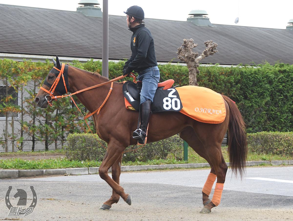 クインズローズの馬体写真