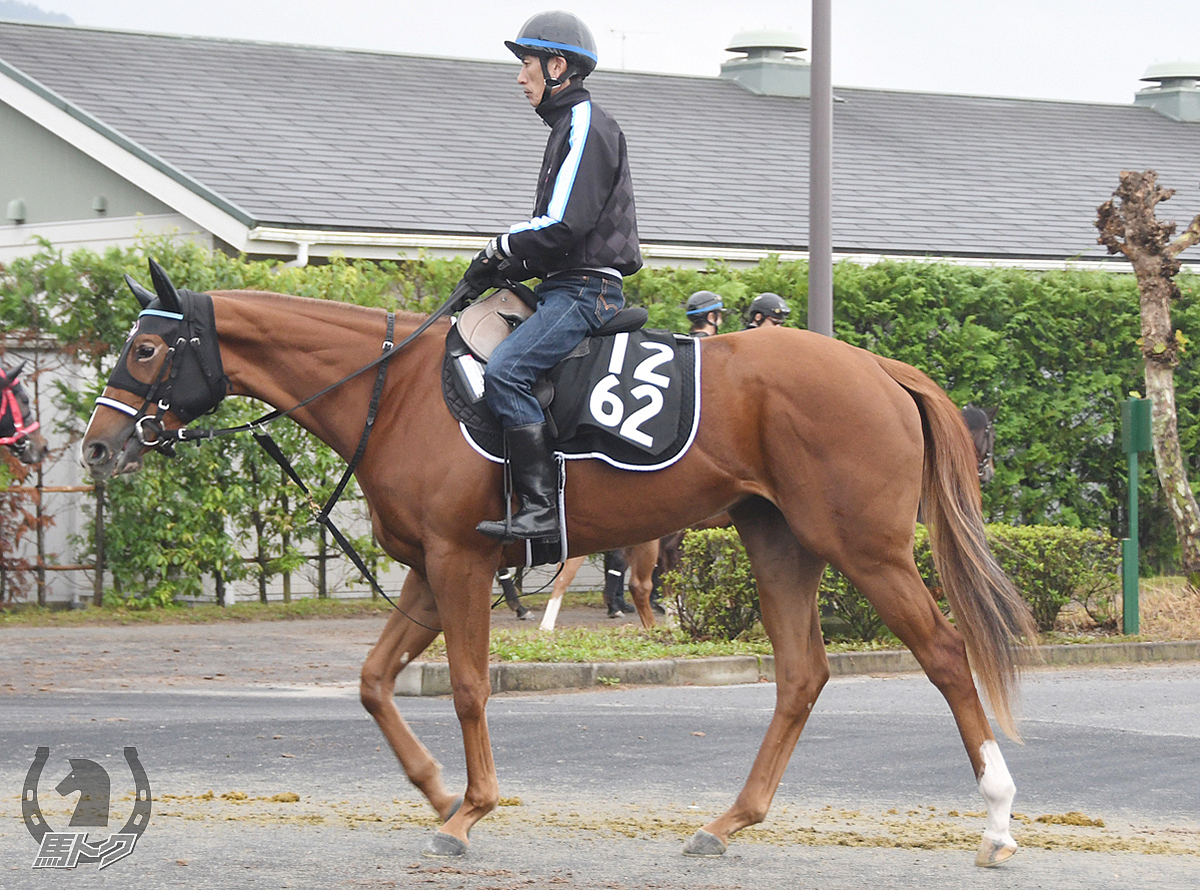 ラブグラーの馬体写真
