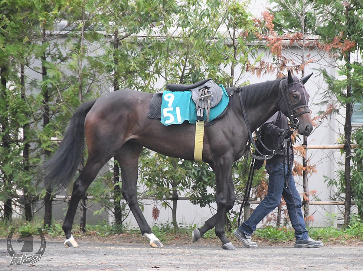 テイエムジョーダンの馬体写真