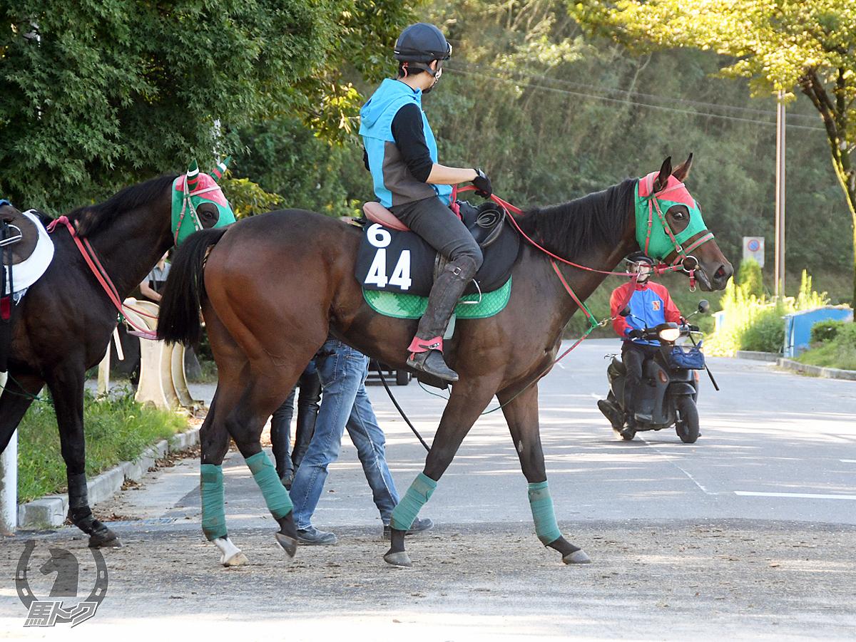 テイエムダイリンの馬体写真