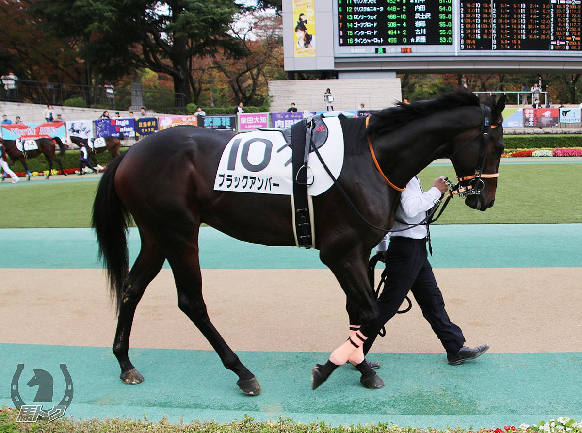 ブラックアンバーの馬体写真
