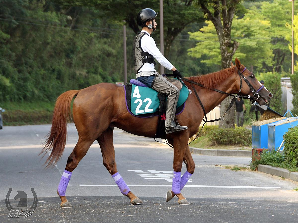テイエムフェスタの馬体写真