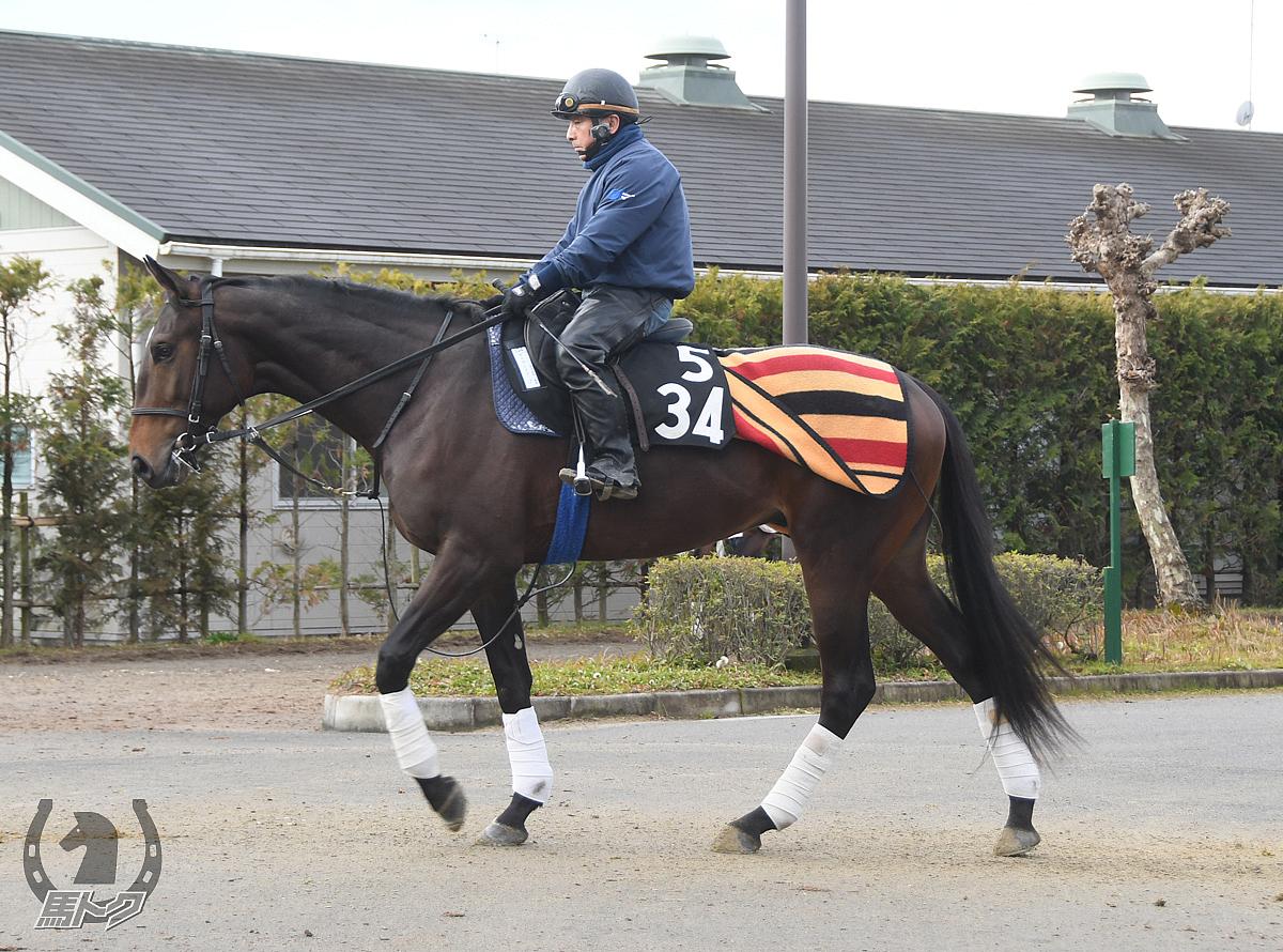 セイウンスクープの馬体写真