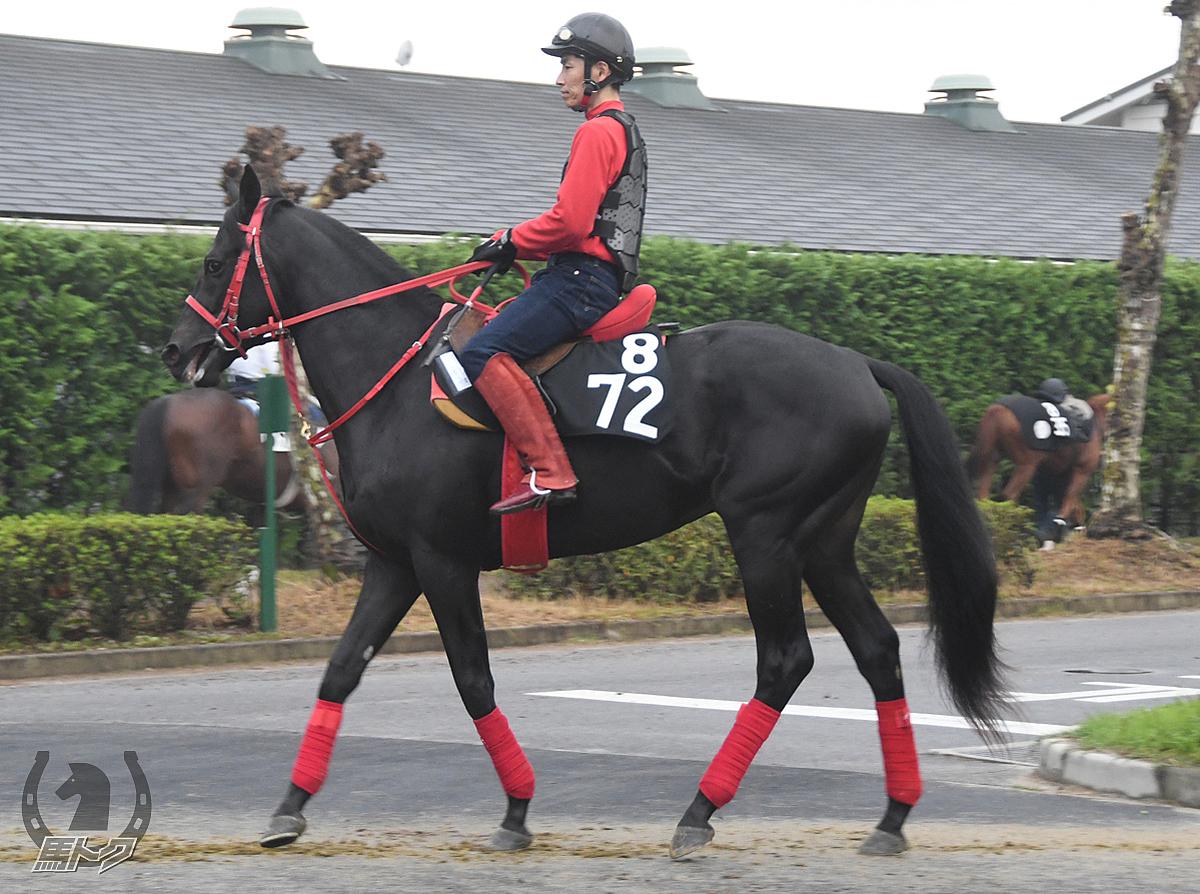 ブラックエヴァンの馬体写真