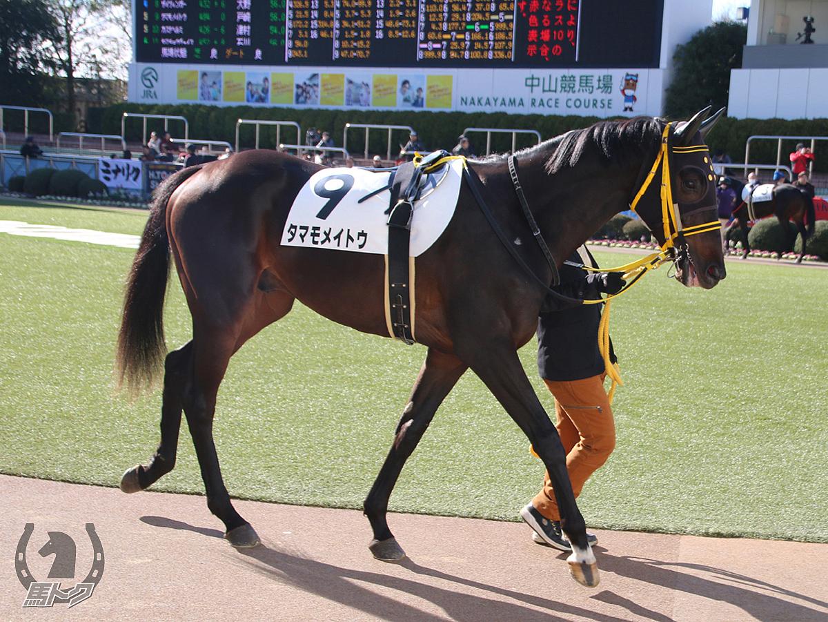 タマモメイトウの馬体写真