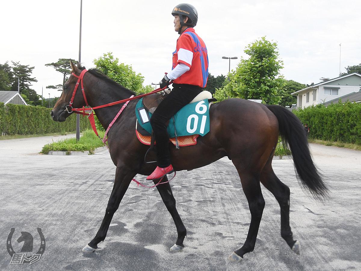 ニューヨークタヤスの馬体写真