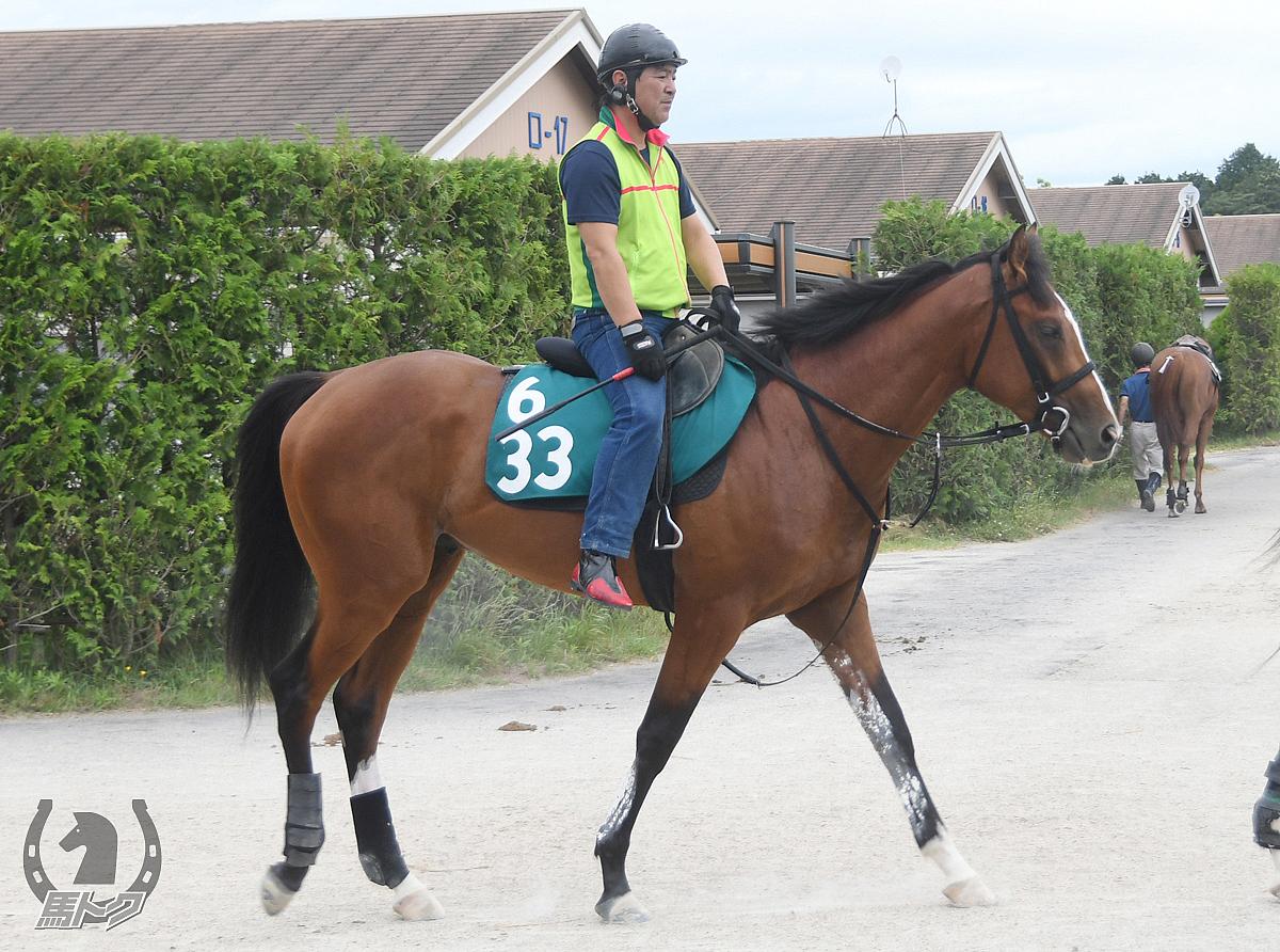 ミルトスミスの馬体写真