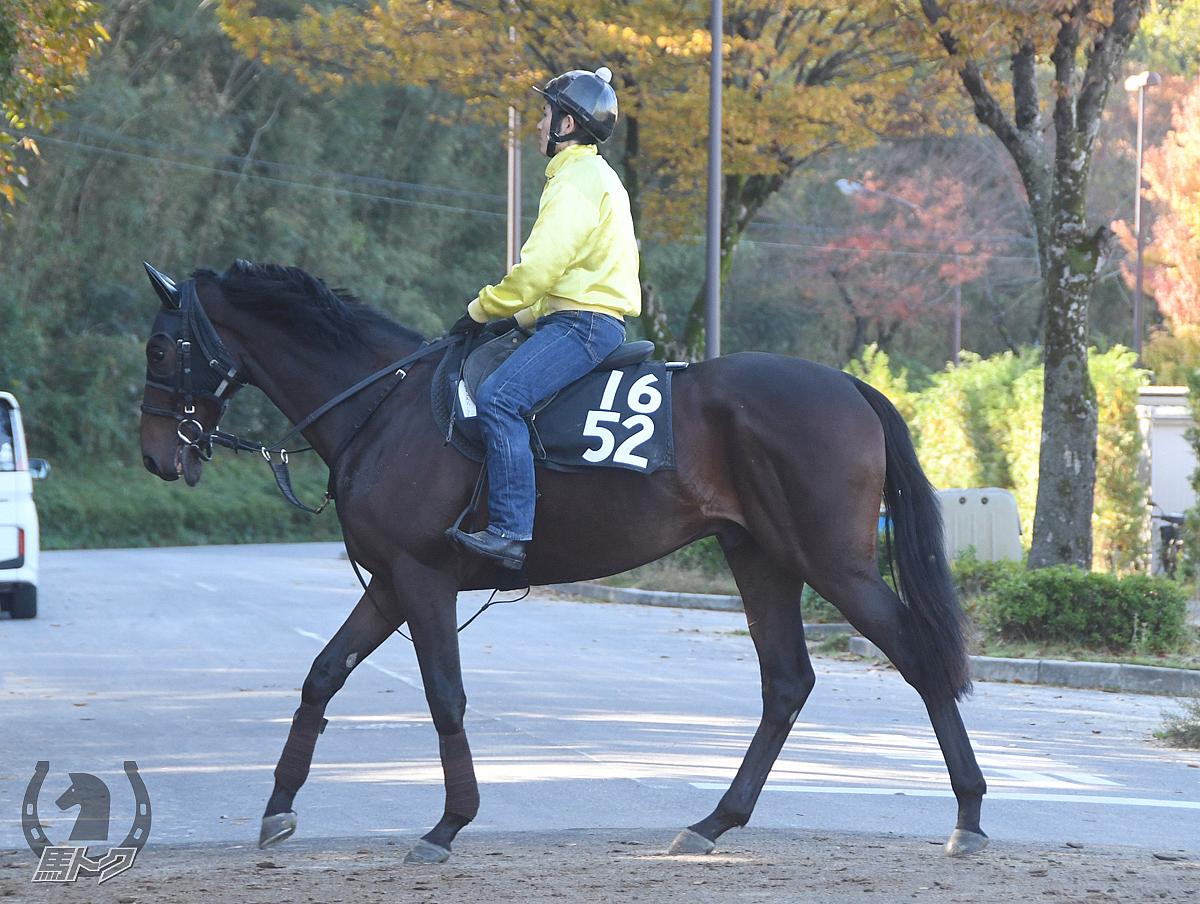 シーンスティーラーの馬体写真