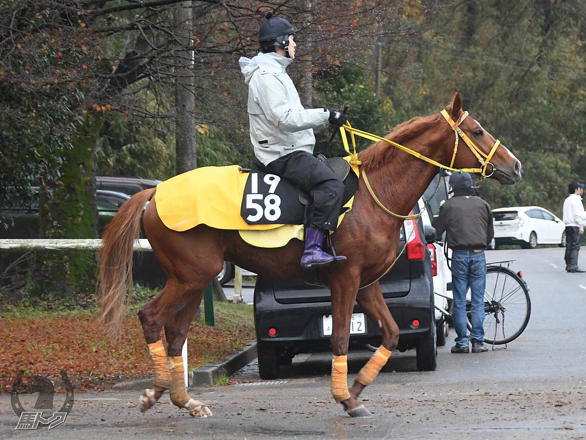 リュウノハドウの馬体写真