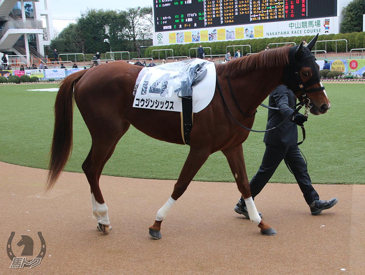 コウジンシックスの馬体写真