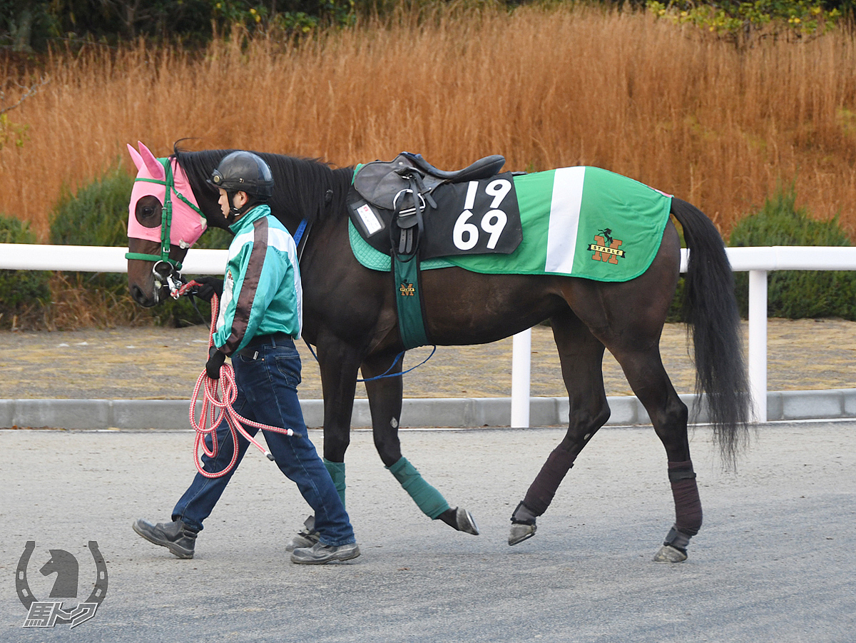 キーメモリーの馬体写真