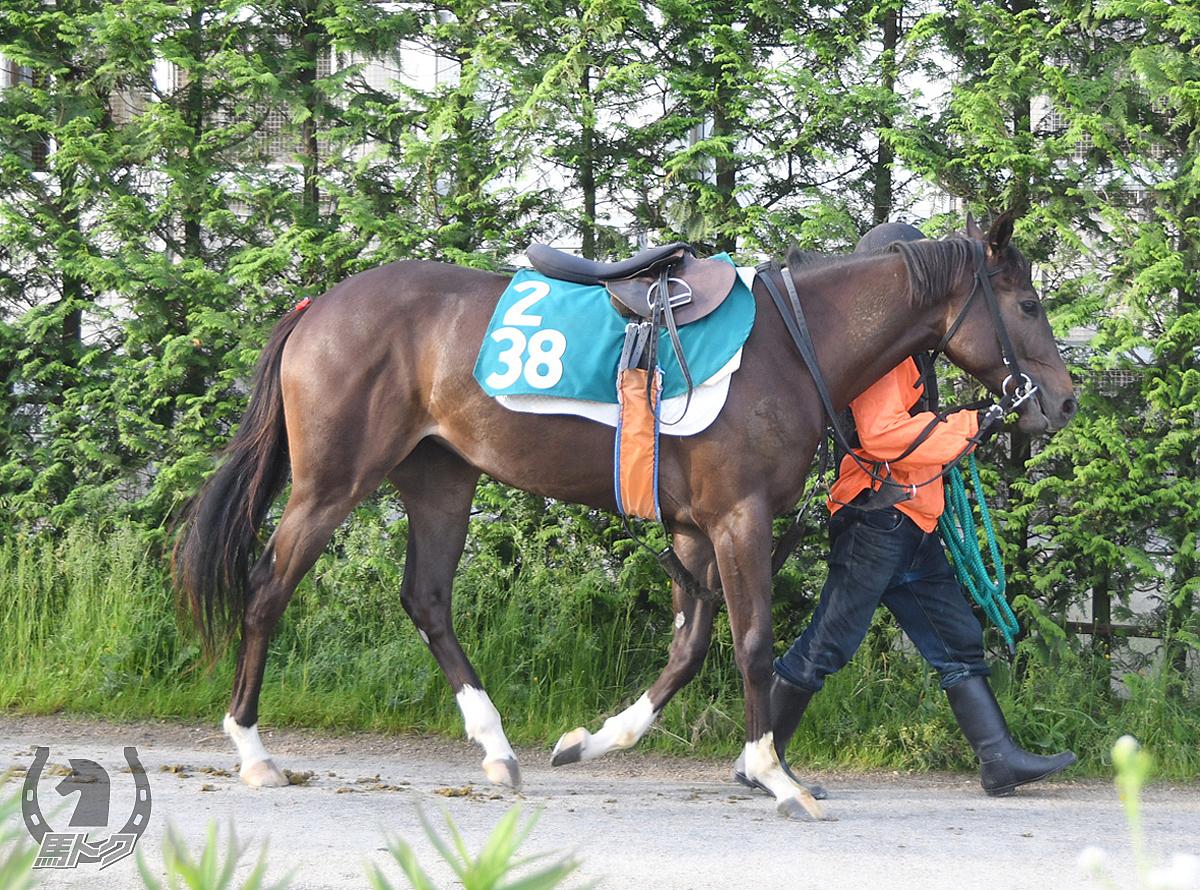 クリノテバクの馬体写真