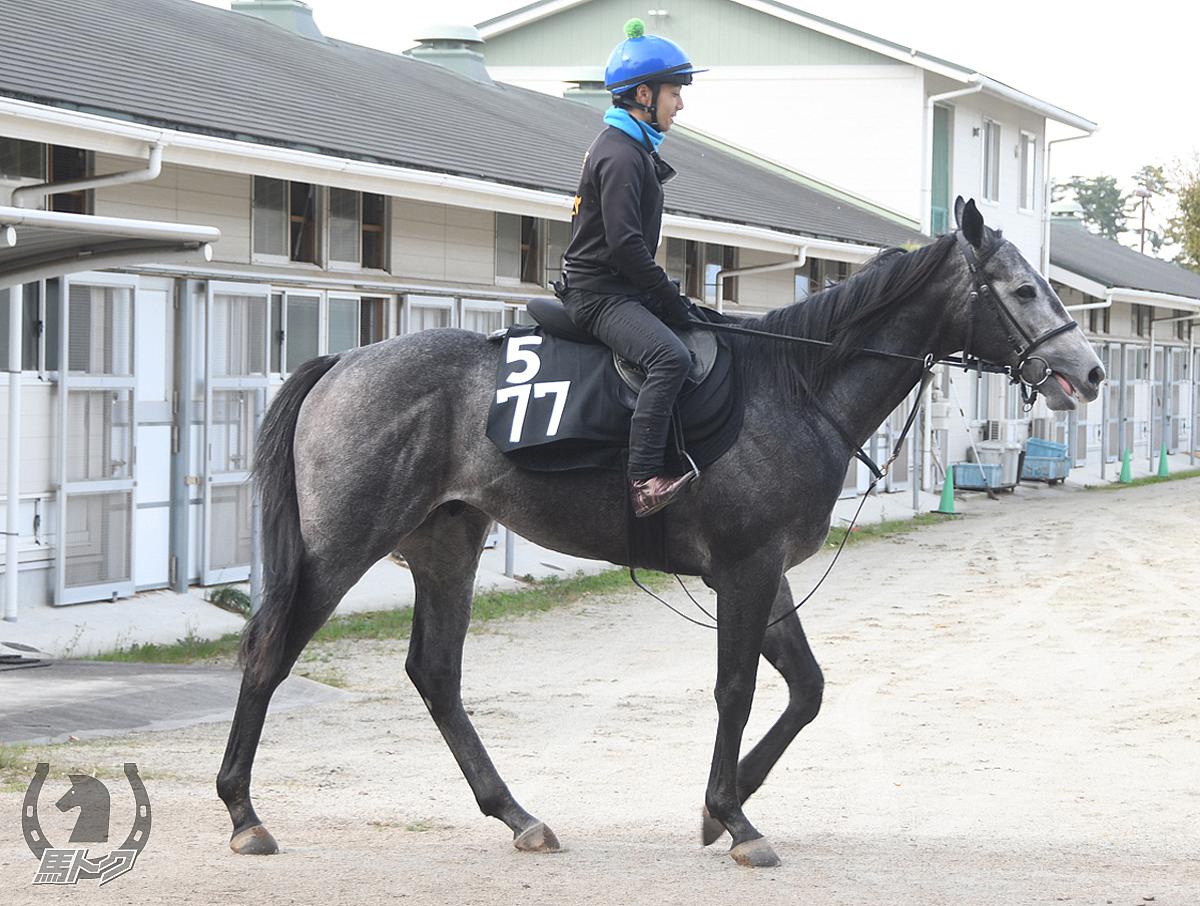 タガノアヴァンスの馬体写真