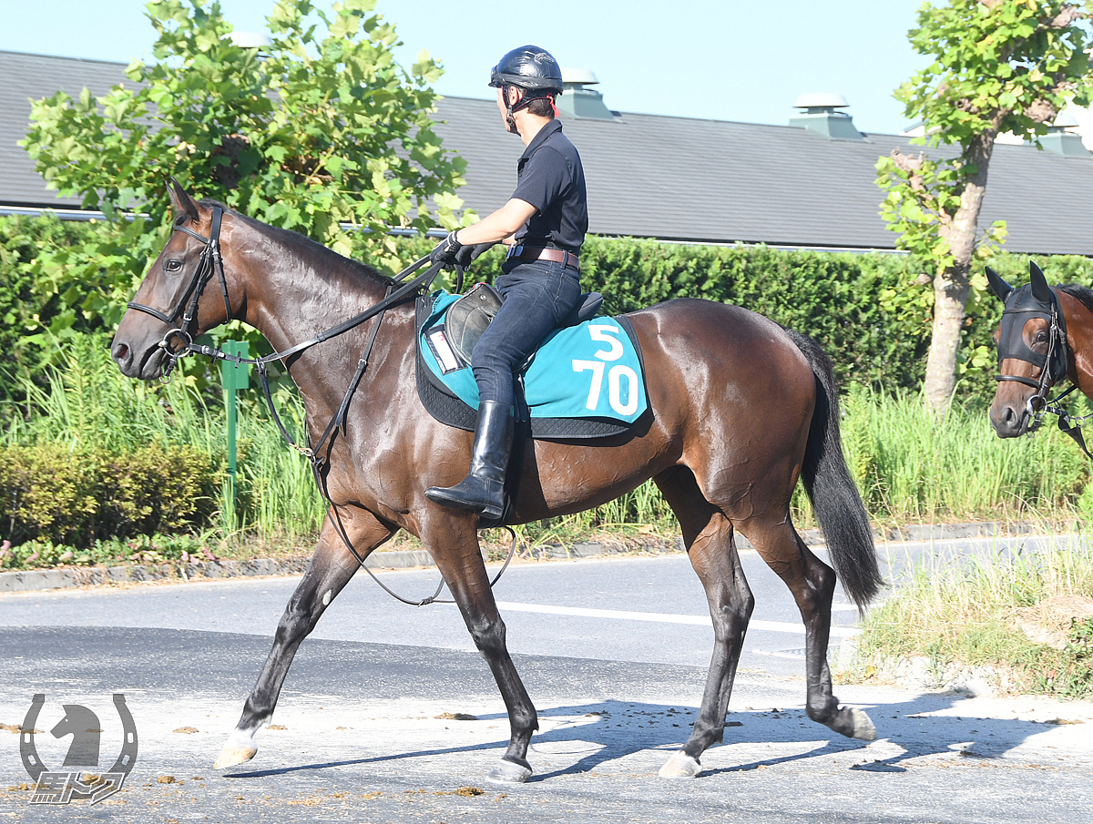 タガノカルーアの馬体写真