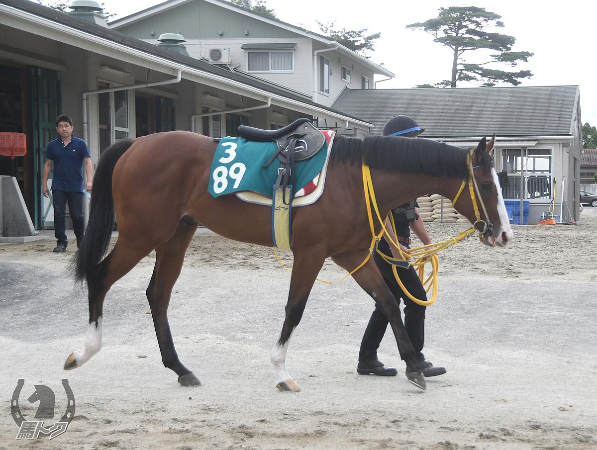 タガノサルバドルの馬体写真