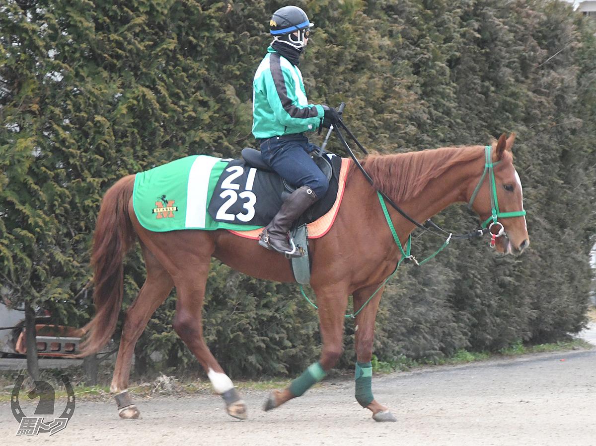 タガノジョーヌの馬体写真