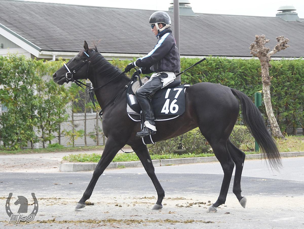 タガノベリキューの馬体写真