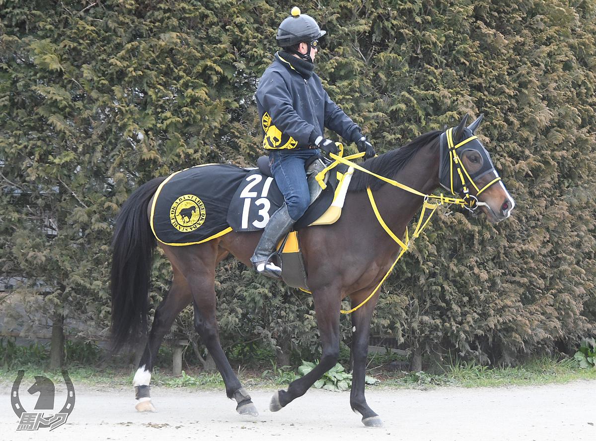 タガノコノミンの馬体写真