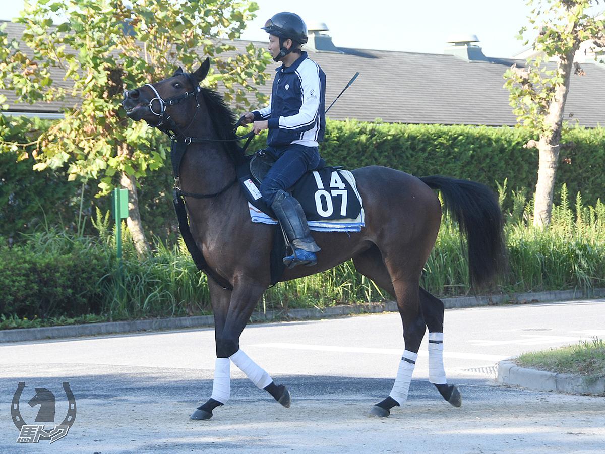 タガノガッキーの馬体写真