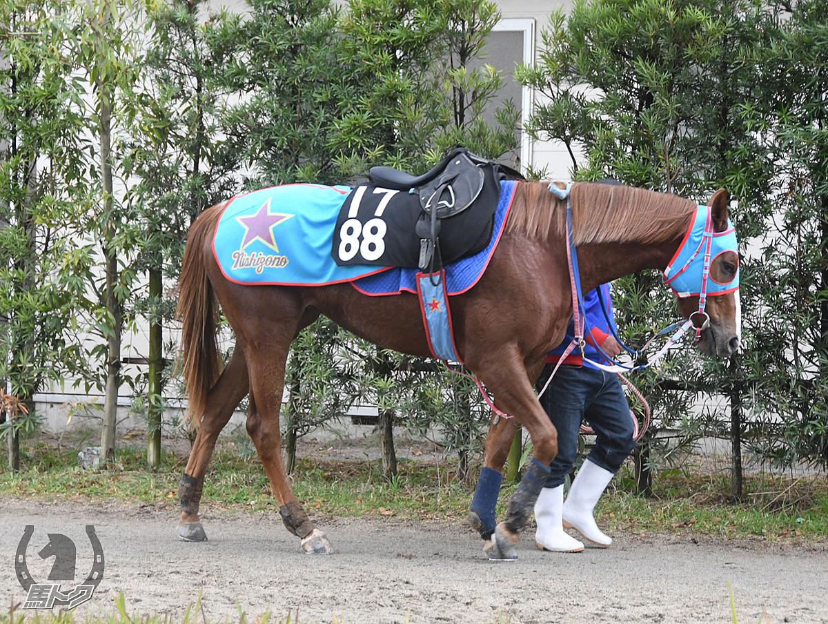 タガノハツコイの馬体写真