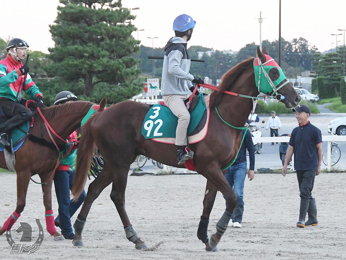 タガノブリザードの馬体写真