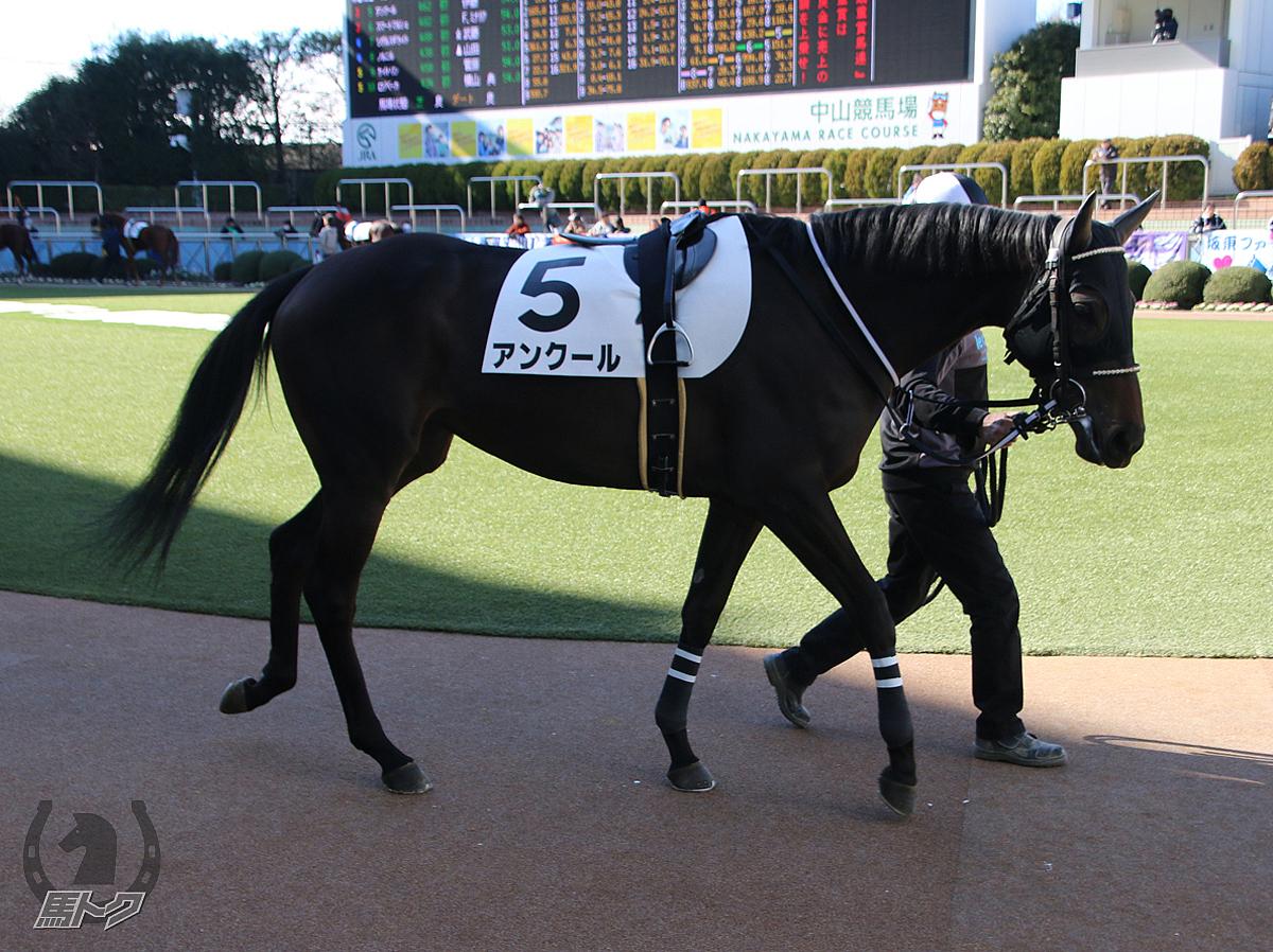 アンクールの馬体写真