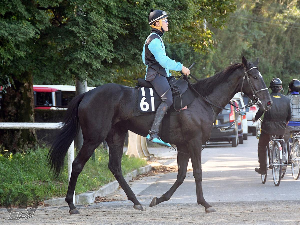 レッドヴィータの馬体写真